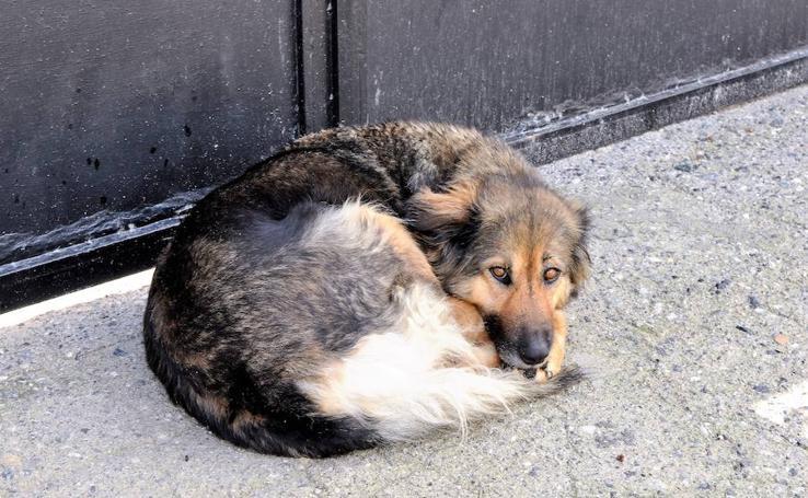 La perra del cementerio de Albuñuelas encuentra familia por fin