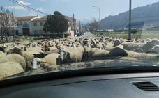 """""""Hora punta"""": la curiosa escena en un pueblo de Granada que triunfa en Facebook"""