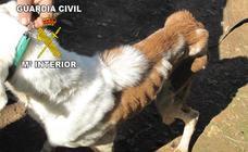 Investigan a un hombre en Santisteban que tenía 29 perros en condiciones lamentables