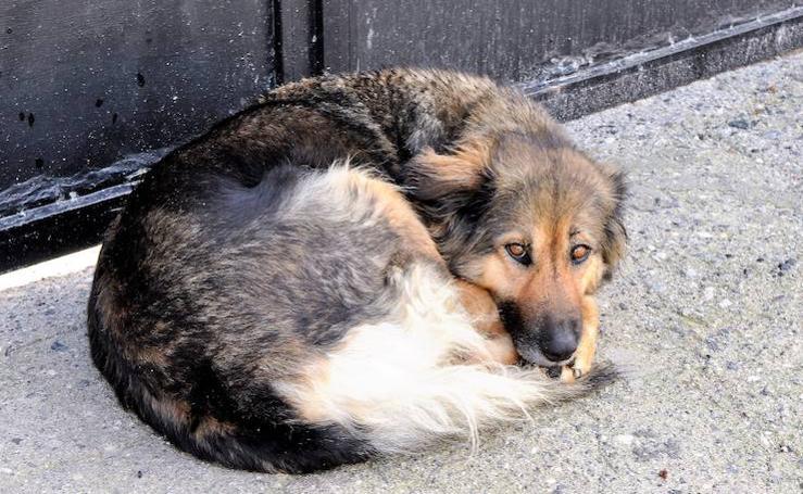 La nueva vida de Linda, la perra que estuvo 10 días a las puertas de un cementerio del Valle de Lecrín