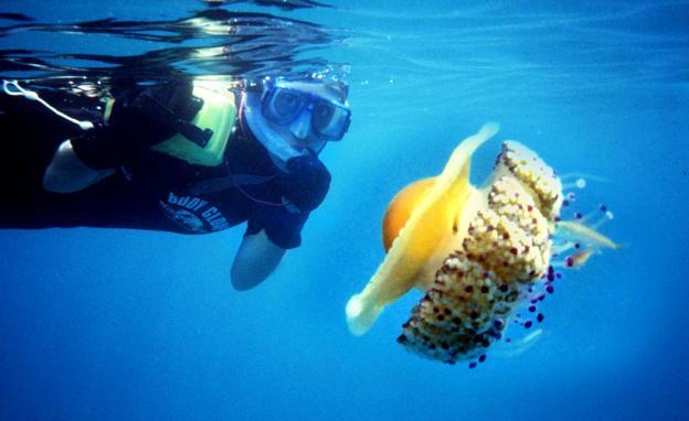 """Una buceadora junto a una medusa de pececillos/J. E. GÃ""""MEZ"""