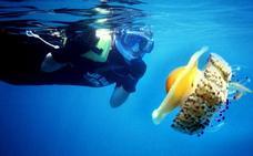 ¿Qué tipo de medusas hay en las playas de Granada? ¿Cuál es la más peligrosa?