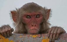 Encuentran el cadáver de un bebé de 16 días que había sido raptado por un mono