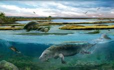 Hallan fósiles de vacas marinas en los Pirineos