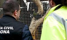 La Guardia Civil intensifica los controles contra el tráfico ilegal de especies protegidas en Almería