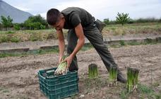 Trabajar para perder dinero en terreno 'panciverde'