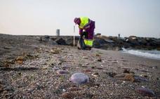 Almería detecta la presencia de la medusa 'carabelaportuguesa' en su litoral