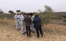 La Junta declara oficialmente la cuarentena en Andalucía por la Xylella fastidiosa