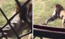El terrible ataque de un león al dueño de un parque de vida silvestre tras entrar en su recinto