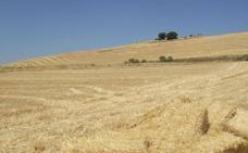 Cuarenta acusados por defraudar cerca de 100.000 euros con una falsa empresa de cereales