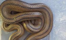 Va a abrir su horno y se encuentra esta serpiente