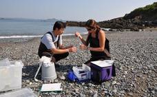 Demuestran que los microorganismos del plancton marino se organizan en comunidades