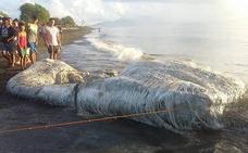 «Viene un tsunami»: la enorme y extraña criatura peluda hallada en la playa desconcierta a los filipinos