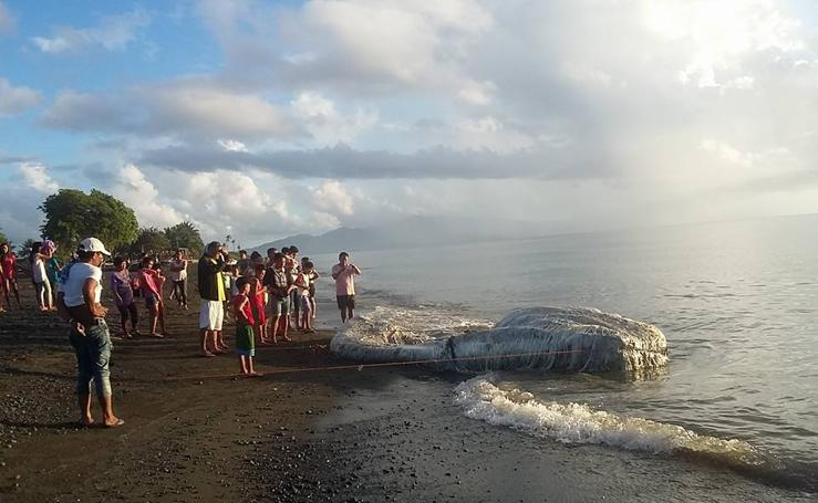 La enorme y extraña criatura peluda hallada en la playa desconcierta a los filipinos
