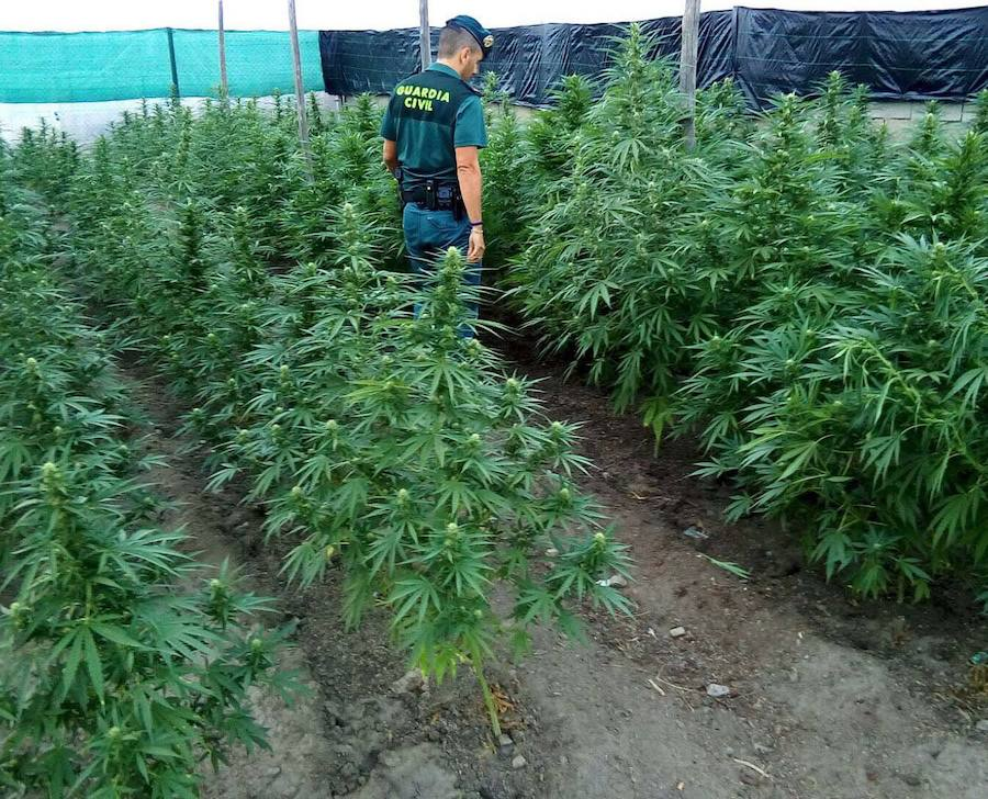 Un agente de la Guardia Civil en una plantación de 'maría'. /IDEAL