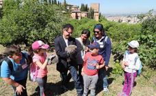 La Alhambra consolida su colonia de erizos con la suelta de nuevos ejemplares