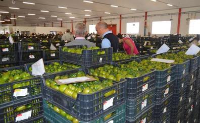 Las frutas y hortalizas de Almería son de las más limpias de residuos de toda Europa