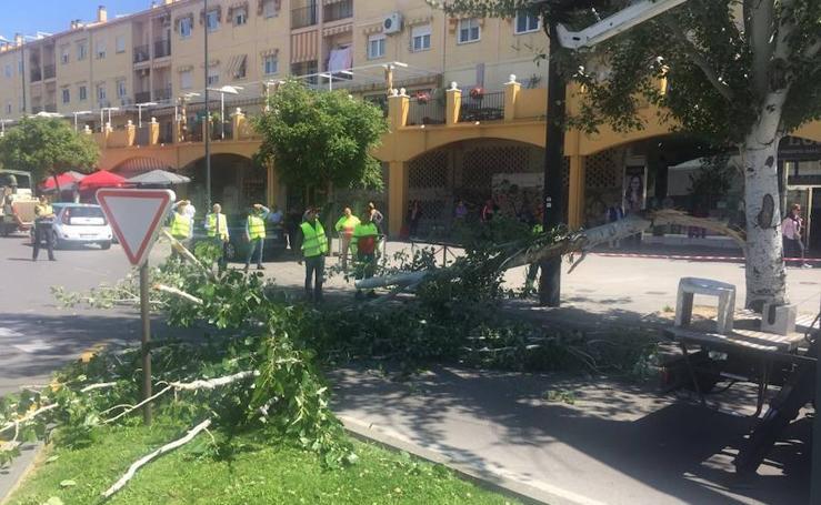 Parte de un árbol cae sobre la catenaria del metro en la Avenida Juan Pablo II