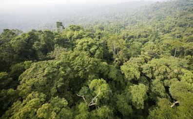 La inquietante evolución de los bosques amazónicos