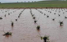El temporal de lluvia y granizo provoca graves daños al mayor viñedo de España