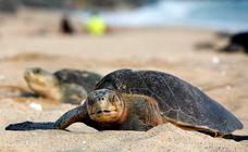 Las tortugas son más grandes en climas más cálidos