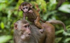 Analizan las conversaciones entre animales para investigar el lenguaje