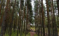 La alarmante amenaza sobre los bosques europeos