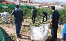 Cae la mayor plantación de marihuana de este 2018 en Granada: más de 12.000 plantas en unas parcelas de Atarfe