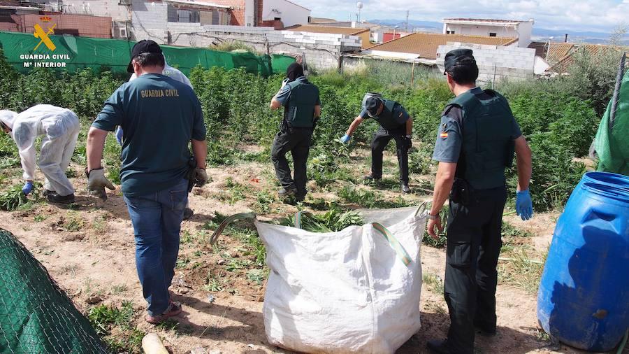 La Guardia Civil interviene 12.195 plantas de cannabis sativa en una operación realizada en Atarfe