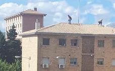 Dos detenidos en un nuevo tiroteo en Molino Nuevo, el cuarto ocurrido en apenas siete días