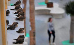 12 aves que colonizan la ciudad