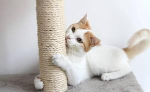 Rascadores para gatos: ¿cuál necesita el tuyo?