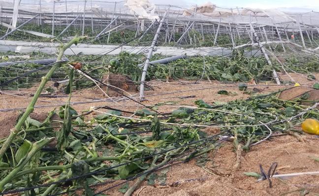 Coag: «Los invernaderos están 'vendidos' si no tienen seguro»