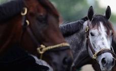 Prueban los beneficios de los caballos ante la esclerosis múltiple