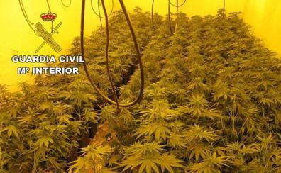 Intervienen en dos semanas 7.000 plantas de cannabis y arrestan a 32 personas en Granada
