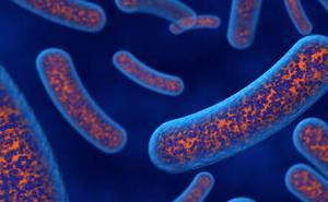 La Estación Experimental del Zaidín se beneficia de medio millón para estudiar microbiomas