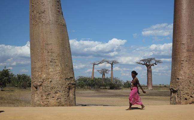 Se mueren los árboles más viejos del mundo (y no sabemos por qué)