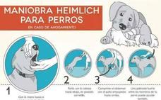 Estos son los 4 pasos para salvar a tu perro si se atraganta