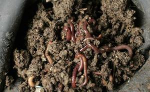 Adopta una lombriz: trituran 35 kilos de residuos anuales en un hogar