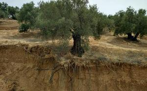 Jaén se queda sin suelo fértil
