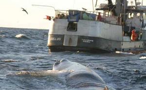 Los cachalotes se suman a las orcas como 'ladrones'