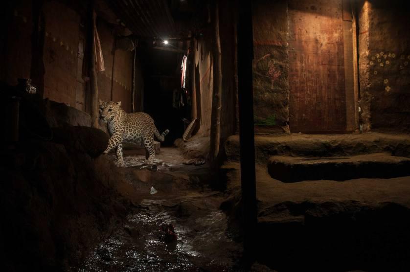 Los animales son cada vez más nocturnos por nuestra culpa