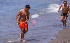Una plaga de medusas se hace con las playas de la Costa granadina