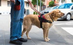 Despiden a un taxista por no aceptar a un ciego con su perro lazarillo