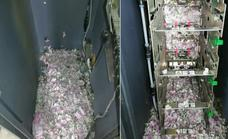 Unas ratas se cuelan en un cajero y se comen 15.000 euros en efectivo