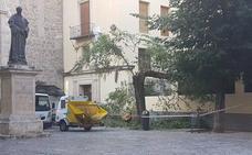Un árbol podrido cae en la plaza Santo Domingo de Granada y daña una cornisa y una valla