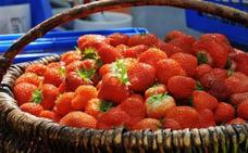 El truco infalible para que tus fresas estén frescas siempre en verano