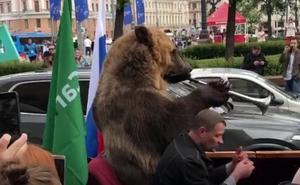 Indignación por el oso obligado a tocar una vuvuzela encima de un coche en el Mundial