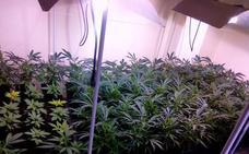 «Cuido ancianos que renuncian a la Dependencia para cultivar marihuana en sus casas»