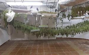 Una plantación 'activa' de marihuana, desde dentro